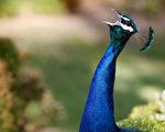【名家专栏】观鸟者须接受多样性和包容性
