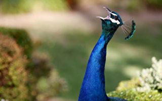 【名家專欄】觀鳥者須接受多樣性和包容性