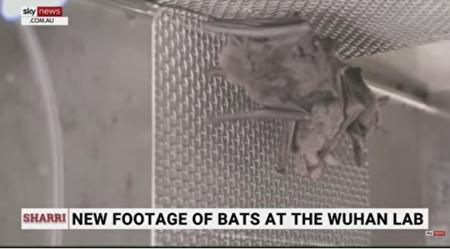 武漢實驗室養蝙蝠影片 打臉世衛調查團說法