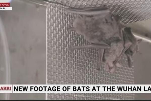 武汉实验室养蝙蝠影片 打脸世卫调查团说法