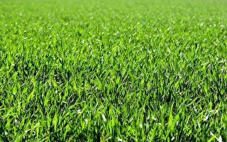 为什么草会让人们觉得痒?