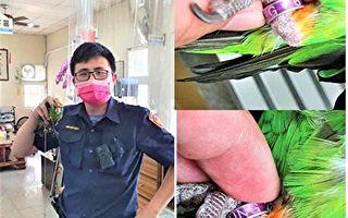 迷路鸚鵡叩窗求救  員警驚嘆:真有靈性