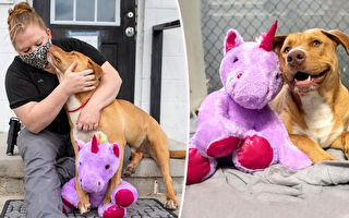 專偷獨角獸玩偶引關注 流浪狗找到幸福歸宿