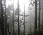 台灣古典詩:特富野古道