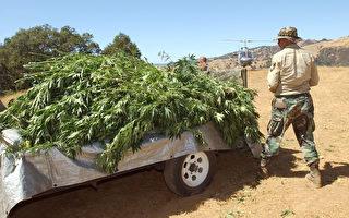 洛县警长发豪语:非法大麻种植者末日到了