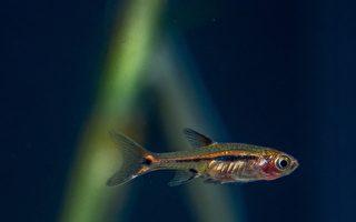 美猶他州下「魚」 數千條從飛機上傾瀉而下