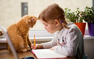 """对猫""""无感""""?养猫比养狗还要好的8个理由"""