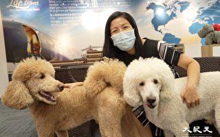 【珍言真语】宠物移民顾问:港人为宠物包私人飞机