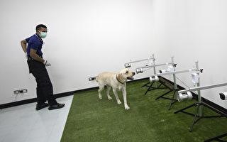 温哥華增新武器 用狗檢測COVID-19病毒