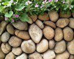 石頭故鄉交響曲──我家的石圍牆