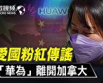 【微视频】孟晚舟判决前 小粉红传谣华为离开加国