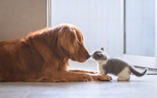 小猫在门口挡人 小狗奉主人之命把它拖走
