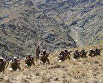 塔利班宣称胜利 阿富汗反抗联军:是假消息