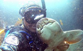 澳洲潛水員與小鯊魚結下11年奇妙友誼