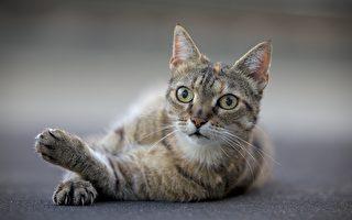 被锁在空屋里52天 荷兰小猫奇迹般存活
