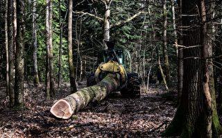 中共大肆採購 法國木材商呼籲停止木材出口