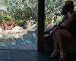美国家动物园:9只狮子老虎COVID检测呈阳性