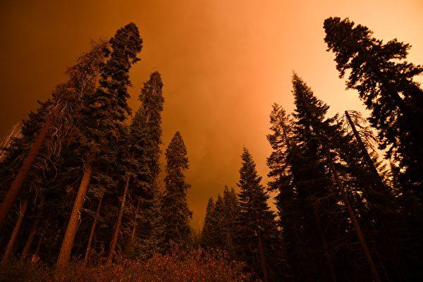 山火烧进红杉国家森林 全球最大巨树受威胁
