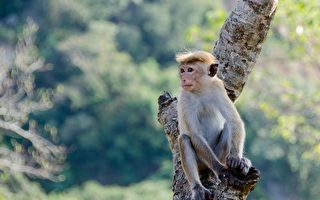 刚出生小狗被猴子绑架到树上 善心人士搭救