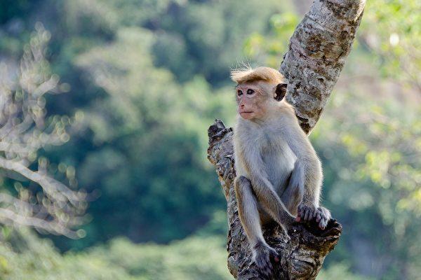 剛出生小狗被猴子綁架到樹上 善心人士搭救