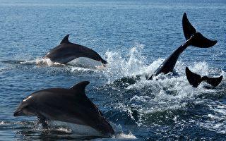 英男受困海中12小時 海豚「通知」救援人員