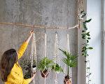 11种美丽的室内悬挂植物 新手也能轻松养活