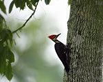 美国内政部宣布23个濒危物种已灭绝