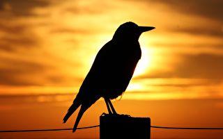 天人感应:羽虫之孽应验大凶之兆