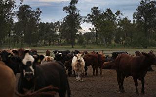 再一家澳洲肉厂被中共列入进口黑名单