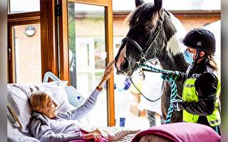 临终老人想念心爱的马 爱心医护帮了愿