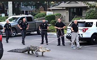 """你见过美国警察""""遛鳄鱼""""吗?"""