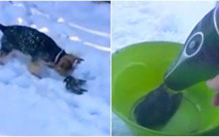 狗狗发现冻僵的鸟 女主人决定这样帮它 没想到最后竟……