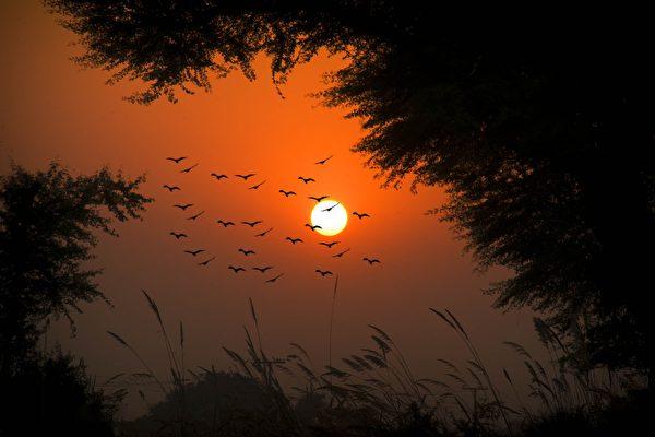 夕陽飛鳥,以往的期望皆如雲散煙消。(Pixabay)