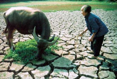 中共再延土地承包期 專家:農地本應私有