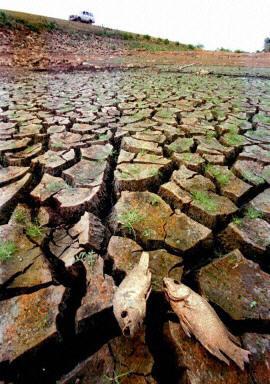 干涸的池塘。(法新社)