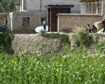 甘肅省關新村的黃土磚房和玉米田 (AFP PHOTO 2004-9-2)