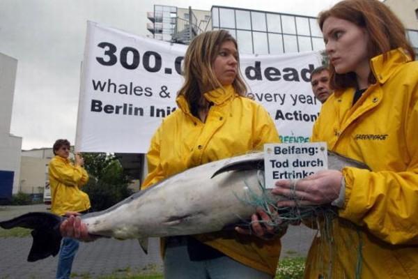 亞洲河水海豚瀕臨絕跡  長江只剩13條