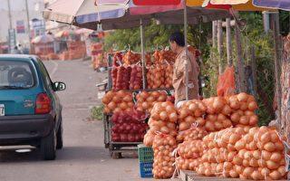 健康蔬菜皇后——洋蔥