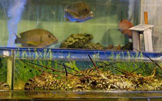 五種內地淡水魚含致癌孔雀石綠