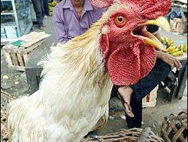 全球防禽流感 布什擬見製藥廠商