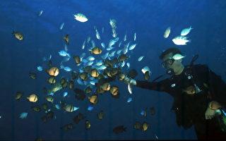 垦丁海洋保护区保育成功 海洋生物倍增