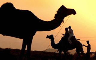詠物詩歌系列:駱駝