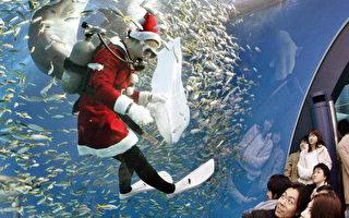 组图:圣诞老人与海豚共舞