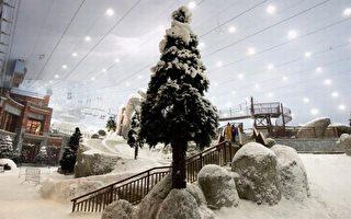 组图:再创奇迹 阳光迪拜的冰雪世界