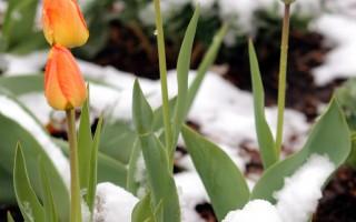 詩:聖潔的雪花
