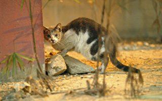 美国男子每天出门喂几十只流浪猫 22年不变