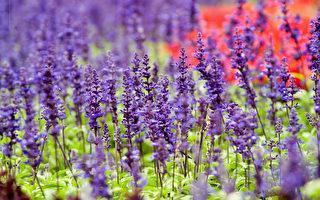 組圖:香港花卉展