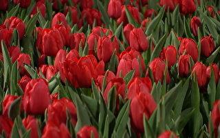 多伦多花卉庭园展