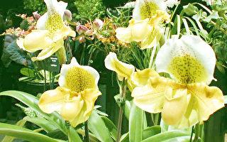 2006新英格兰春季花展