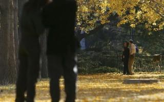 陕西发现一棵树龄两千多岁银杏古树